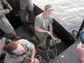 الأمير هاري يلتقط تمساحا طوله 3.1 متر في أستراليا