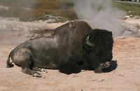 تظاهرات في إسبانيا ضد مهرجانات إطلاق الثيران الهائجة