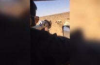 سعودي يقتل جملا انتقاما لأخيه (فيديو)