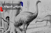 أخطاء بشرية وأسباب سخيفة وراء انقراض هذه الحيوانات