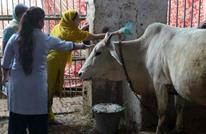 بعد عصابات حماية الأبقار ولاية هندية توفر لها سيارات إسعاف