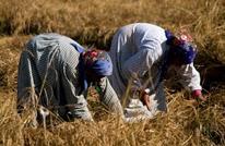 مصر تغيّر سياساتها الزراعية توفيرا للمياه