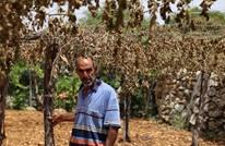 صحيفة تروي قصة مزارع فلسطيني قطع المستوطنون أشجاره