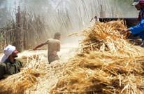 بلومبيرغ: هذا ما يحدث عندما تقرر الدول تحديد صادراتها من القمح