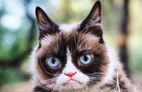 """""""القط الغاضب"""" يغادر الحياة ويترك وراءه ثروة مالية"""