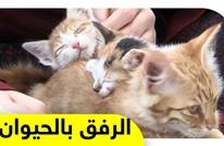 فريق شبابي في غزة يعمل على مساعدة ورعاية القطط الضالة