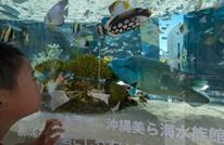 الأسماك تبدأ نسيان البشر في اليابان بعد كورونا