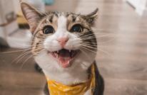 وصلت إلى الفضاء وتنام 16 ساعة.. ماذا تعرف عن القطط؟ (تفاعلي)
