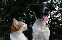 في غياب البشر.. الحيوانات تتعرف إلى بعضها البعض في اليابان