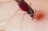 الصحة المصرية: سنقضي على الملاريا في الشهر الجاري