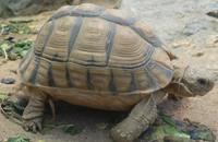 جزائريات يستعن بخرافة السلاحف ليمشي أبناؤهن مبكرا