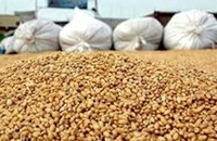 الحكومة المصرية تشتري 5 ملايين طن من القمح