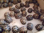 ضبط كمية قياسية من السلاحف المهربة في مدغشقر