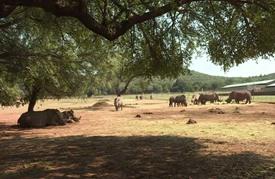 أطباء يعالجون حيوانات وحيد القرن الناجية من عمليات الصيد