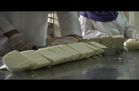 إنتاج أجبان تقي من هشاشة العظام في غزة المحاصرة