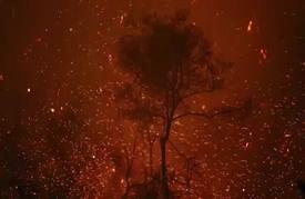 أشجار هالكة وجفاف قياسي وصفة لحرائق الغابات في الغرب الأمريكي