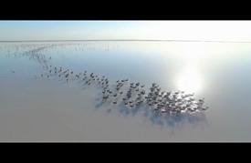 """""""بحيرة الملح"""" التركية.. جنة طيور الفلامنغو"""