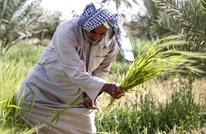 أزمة المياه تدفع العراق إلى حظر زراعة 8 محاصيل صيفية