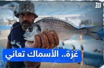 غزة.. الأسماك تعاني