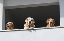 رئيس كوريا الجنوبية يتحدث عن إمكانية حظر أكل لحوم الكلاب