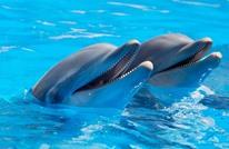 طفلتان تسرقان سيارة والدهما للذهاب برحلة مع الدلافين