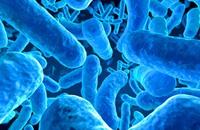 اكتشاف بكتيريا تستخدم الملح لبناء ملاجئها