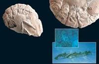العثور على حفريات لكائنات بحرية عاشت قبل نصف مليار عام