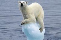 مقترحات أمريكية جديدة لإنقاذ الدب القطبي من الانقراض