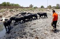 بعد الزراعة.. الجفاف يطال الحيوانات وتحذير من هجرة بالعراق