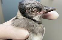 مرض جديد لدى الطيور قد يتحول إلى وباء.. يسبب العمى ثم الموت