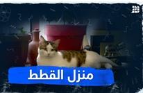 منزل القطط