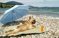 شاطئ مخصص للكلاب على ساحل روما