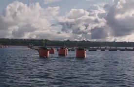 استخدام مفرط للمضادات الحيوية في إنتاج أسماك السلمون في تشيلي