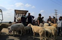 ركود حاد في أسواق الماشية بغزة بسبب تراجع القدرة الشرائية