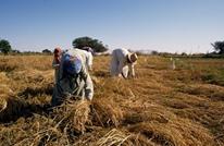 كارثة بيئية وزراعية ومائية بانتظار مصر.. وهذه تفاصيلها