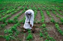 """السودان يسمح بتصدير """"الفول"""" بعد حظر استمر 8 أشهر"""