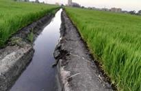 سد النهضة: مصر تقلص مساحات بعض المحاصيل وتتوعد بالغرامات