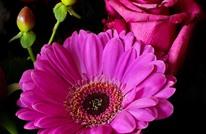 تعرّف على الزهرة التي تتماشى مع شهر ميلادك