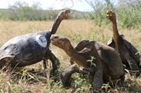 دراسة: خطر انقراض الحيوانات العاشبة يفوق المفترسة