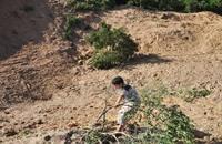 """حرب إسرائيل تجرّف """"النفط الأخضر"""" في غزة"""