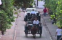 كولومبيا: نفوق الخيول يهدد جولات العربات السياحية