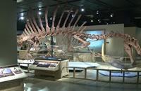 اكتشاف نوع من الديناصورات يتكيف بالأوساط المائية