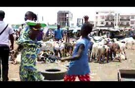 """""""اللاّدوم"""".. خروف فوق العادة في السنغال!"""