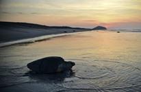 عسكر وطائرات بدون طيار لحماية بيوض السلاحف بالمكسيك