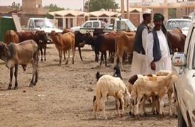 السودان بلد الـ 100 مليون رأس ماشية تعاني غلاء الأضاحي