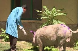 حديقة الحيوانات في كابول متنفس نادر للسكان رغم الحرب