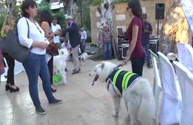 """بعيدا عن أزماتها.. بيروت تنظم مسابقة لـ""""ملوك جمال الكلاب"""""""