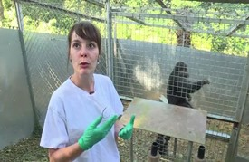 أبحاث فرنسية حول الحدود الفاصلة بين عقلي الإنسان والحيوان