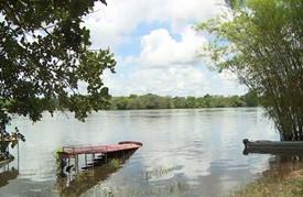 أشجار السلام في غابات الأمازون لتكريم ضحايا النزاع الكولومبي