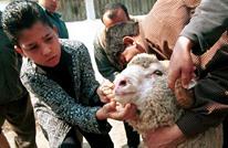 جدل بالمغرب بعد فتوى تبيح الاقتراض الربوي لشراء أضحية العيد